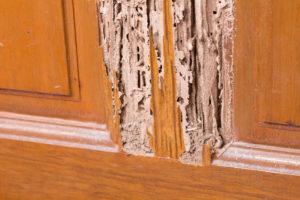 Wood Destroying Organisms